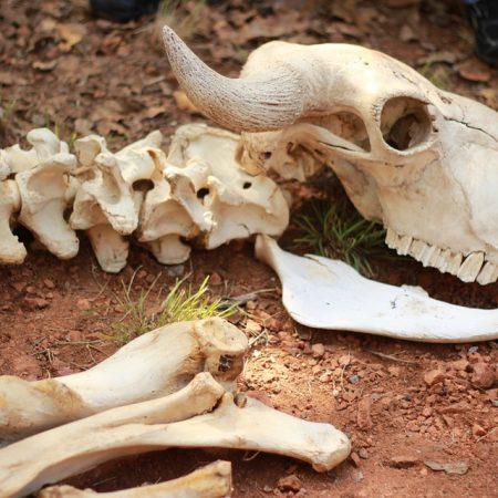 skeleton-433340_960_720
